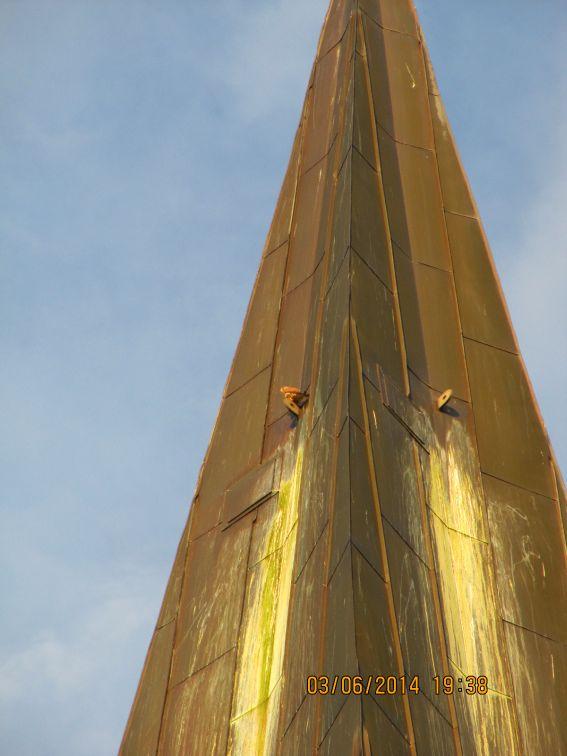 Turmfalke-2